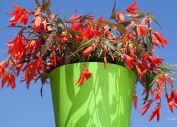 Bloemen-Planten-Fotografie