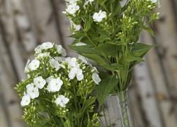 Phlox Arrangement gefotografeerd door Joop Gijsbers Bloemen en Planten Fotograaf